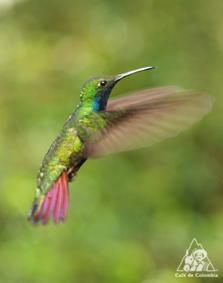 鳥類の種類は世界一