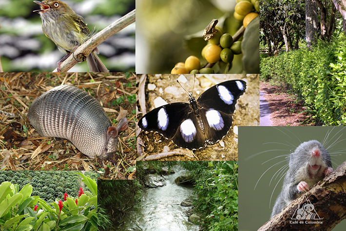 生物多様性の国、コロンビア