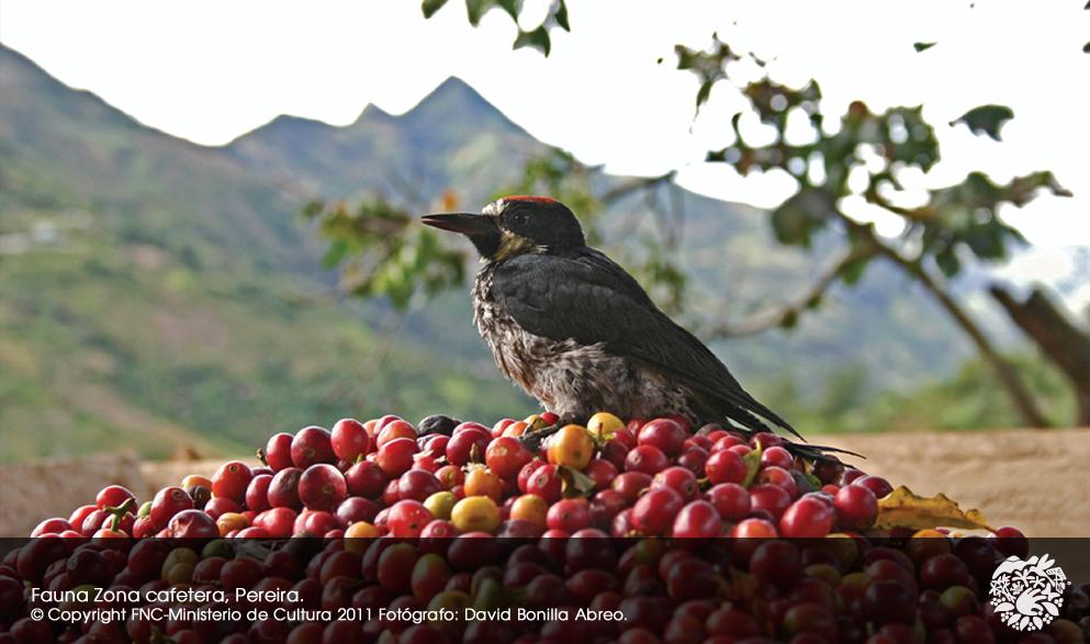 世界遺産地域の鳥