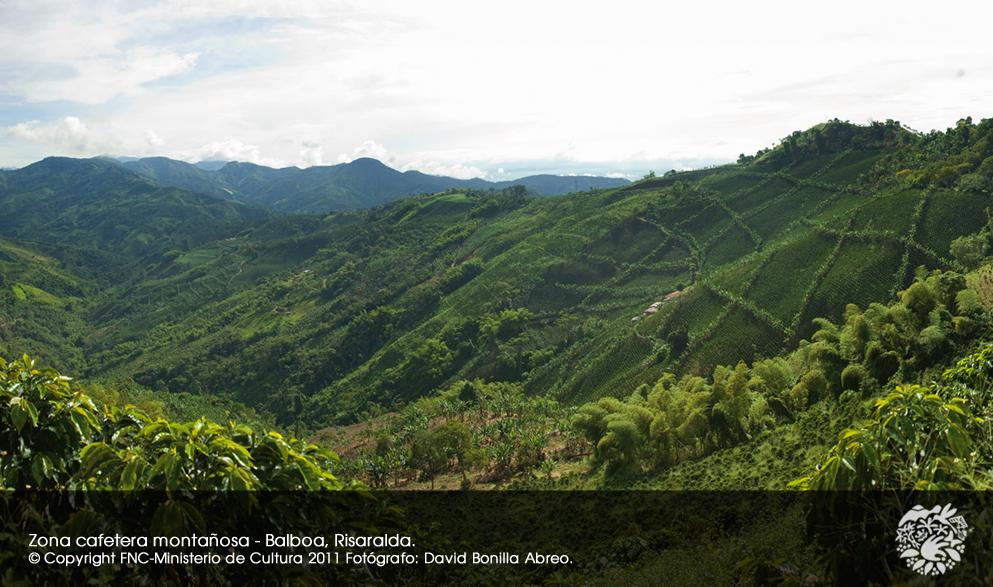世界遺産地域の斜面にあるコーヒー畑