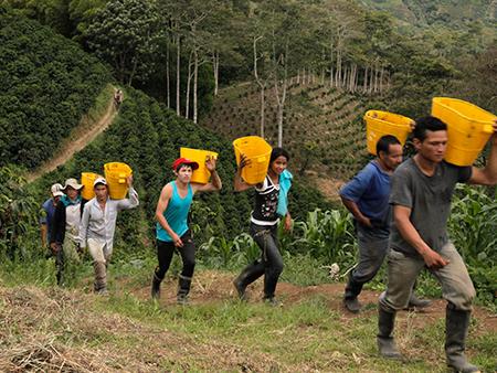 コロンビアコーヒーの名産地、ウィラの写真1