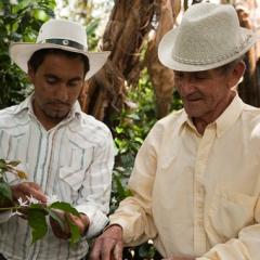 コロンビアコーヒーの産地、ナリーニョのコーヒー生産者