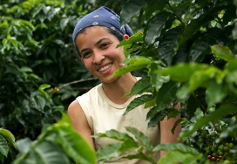 コロンビアコーヒーの産地、カルダス