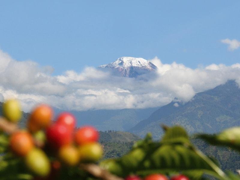 コロンビアコーヒーの産地、トリマ(Tolima)の山の風景