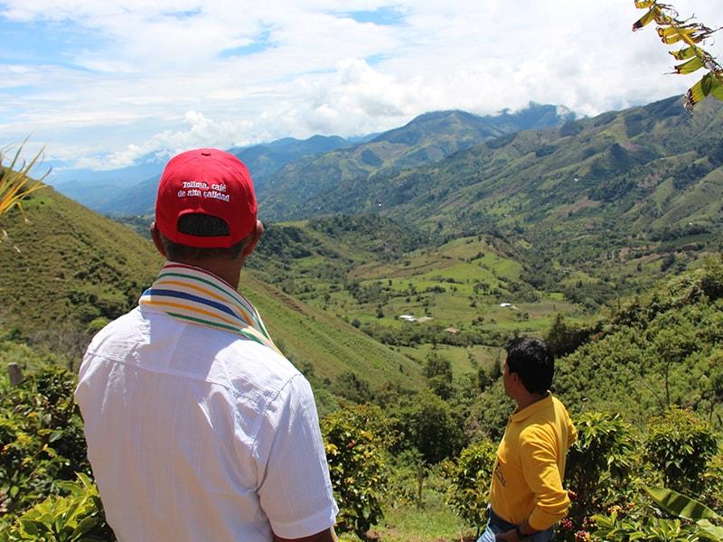 コロンビアコーヒーの産地、トリマ(Tolima)コーヒー畑の風景
