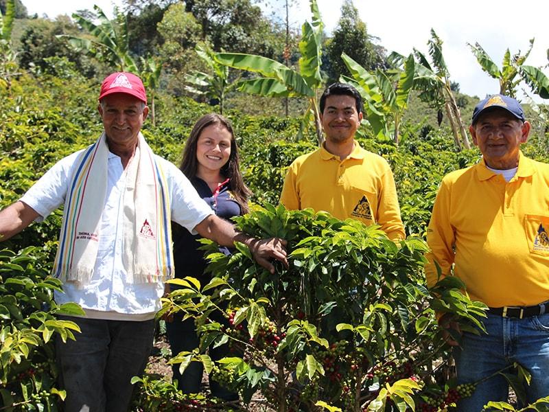 コロンビアコーヒーの産地、トリマ(Tolima)コーヒー生産者