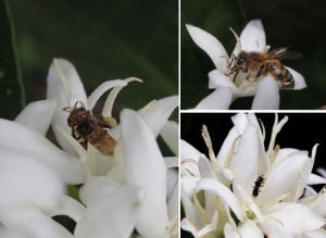 88種の在来種のミツバチ