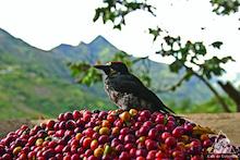 コロンビア: 生物多様性のパラダイス
