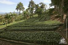 コーヒー生産地域