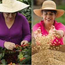 コロンビアコーヒーと女性生産者たち