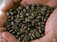コーヒーテイスターズ フレーバーホイール