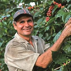 コーヒーの産地情報 サンタンデール